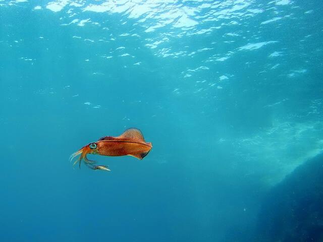 Nurkowanie na Cyprze Kalmar