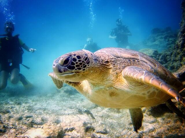 Nurkowanie na Cyprze żółw